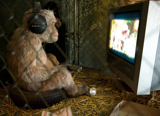 Monkey Watching TV thumb 550x402